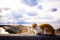 Картинка кошка, лето, небо, кот, фон