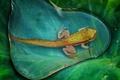 Картинка вода, макро, природа, лист, капля, лягушка, головастик