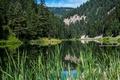 Картинка зелень, лес, деревья, горы, озеро, камыши, США