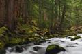 Картинка лес, вода, деревья, река, камни, мох, поток