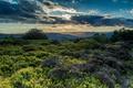 Картинка облака, холмы, поля, кусты