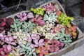 Картинка растения, лепестки, много, разные