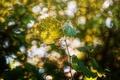 Картинка листья, свет, природа