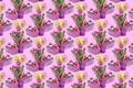 Картинка праздник, текстура, фон, букет, тюльпан, яйцо, Пасха