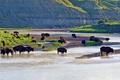 Картинка река, США, Северная Дакота, Theodore Roosevelt National Park, американские бизоны, Малая Миссури