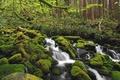 Картинка лес, вода, зеленый, река, камни, мох