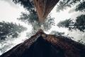Картинка небо, листья, деревья, ветки, листва, ствол, кора
