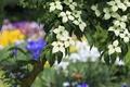 Картинка дерево, весна, кизил