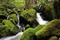 Картинка зелень, вода, река, камни, мох, поток