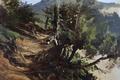 Картинка пейзаж, природа, картина, Карлос де Хаэс, Дорога в Лесах Астурии
