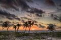 Картинка море, небо, облака, пальмы, берег, вечер