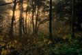 Картинка деревья, туман, Англия, осень, лес, Dockray