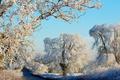 Картинка солнце, деревья, снег, дорога, зима