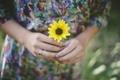 Картинка цветок, желтые, руки, лепестки, кольцо