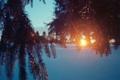 Картинка зима, солнце, снег, ветки, елка