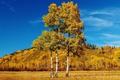 Картинка осень, трава, листья, деревья, пейзаж, холмы, Канада
