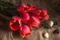 Картинка красный, тюльпаны, рябчик