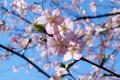 Картинка небо, ветка, весна, цветение