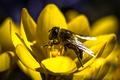 Картинка цветок, лепестки, насекомое