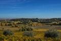 Картинка лето, солнце, деревья, поля, Италия, плантации, Veneto