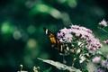 Картинка цветы, бабочка, крылья, насекомое