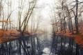 Картинка осень, вода, деревья, туман, пруд, отражение, Лес