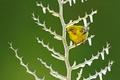Картинка лед, природа, птица, растение, камышевка