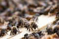 Картинка природа, улей, пчёлы