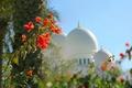 Картинка цветы, купол, ОАЭ, Абу-Даби, мечеть шейха Зайда