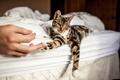 Картинка кошка, кот, рука, лапы, лежит