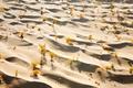 Картинка песок, осень, деревья, пустыня, Китай