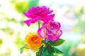 Картинка макро, фон, розы, красота, лепестки