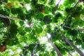 Картинка листья, деревья, Австралия, Квинсленд, палма, Daintree National Park