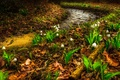 Картинка цветы, природа, река