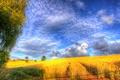 Картинка поле, облака, деревья, природа, холмы, урожай