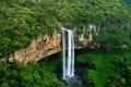 Картинка лес, деревья, скала, обрыв, поток, Бразилия, штат Риу-Гранди-ду-Сул