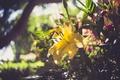Картинка цветок, лилия, желтые лепестки