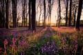 Картинка свет, деревья, цветы, утро