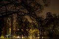 Картинка деревья, ночь, ветки, огни, пруд, парк, газон