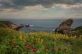 Картинка море, небо, облака, пейзаж, цветы, природа