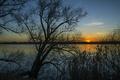Картинка закат, силуэты, река, ветки, Mantua, Lombardy, деревья
