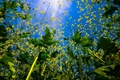 Картинка небо, листья, природа, цветочки, вид снизу, веточки