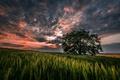 Картинка небо, трава, облака, пейзаж, закат, природа, дерево
