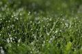 Картинка трава, капли, зеленый