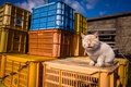 Картинка кошка, фон, ящики