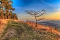Картинка дорога, горы, природа, дерево, Германия, Тюрингия