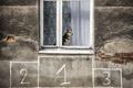 Картинка дом, собака, окно